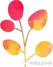 """贵州""""樱桃地图""""最全的贵州樱桃采摘地图 水族资讯 贵阳水族馆第1张"""