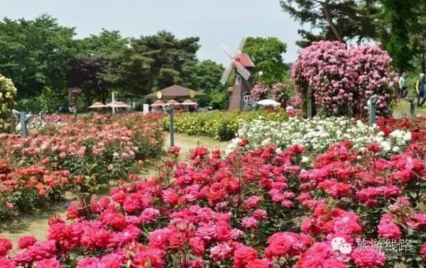 陵玫瑰花海旅游节