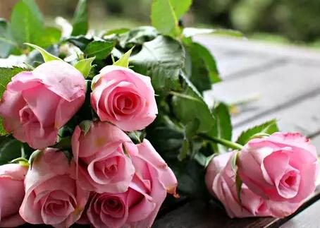 分享玫瑰花的种植方法