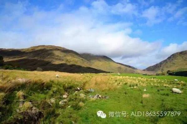 那些牛X的爱尔兰华人们-搜狐旅游