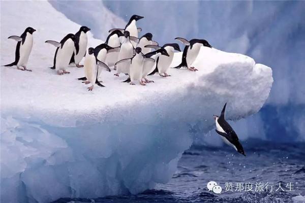 南北极、亚马逊、阿拉斯加,顶级邮轮玩家一生