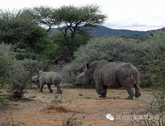 纳米比亚可爱的小动物们