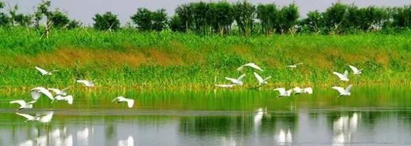 乐行族 4月30日,宁波杭州湾国家湿地公园看万物春生 鸣鹤古镇一日游图片