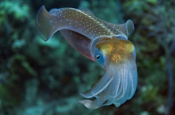 11种具备特异功能的动物 鱼会喷火