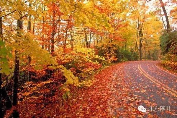 加拿大枫叶大道图片