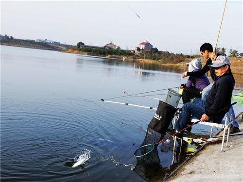夏季夜钓鲫鱼选浮漂以及调漂技巧