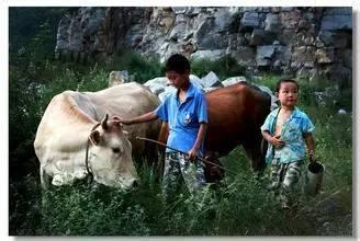 80年代乡下童年记忆 放牛 抓鱼 打猪草