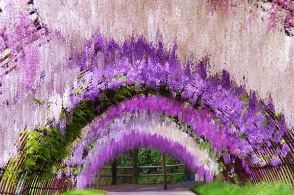 美爆了 送走樱花后,带你去赏最美的紫藤花海 伴米体验