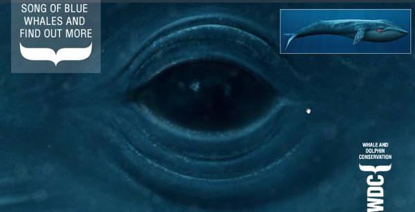 深海蓝鲸手绘图片