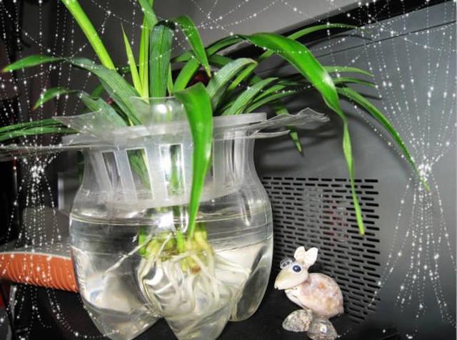 """洗衣液瓶做成""""花盆"""",太漂亮了"""