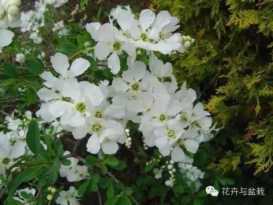 10种耐寒的庭院灌木,北方的盆友还不知道种啥花么