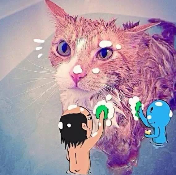 韩国漫画家恶搞宠物照片 太欢乐了!