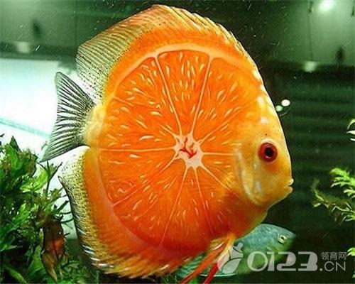 梦见鱼会说话是什么意思