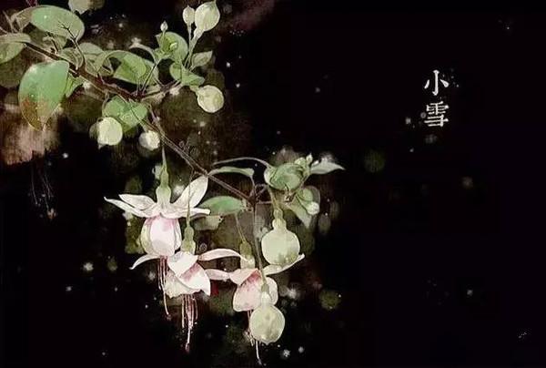 今日立夏,原来24节气也有专属花