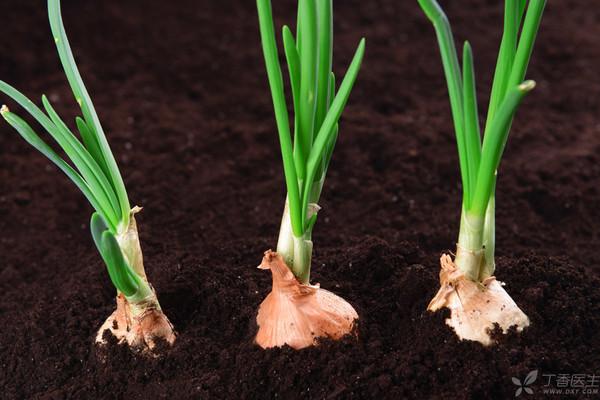 天气暖和了,食物也变得不安分起来,冒个芽抽个枝啥的,再常见不过。但这给不少人带来了困惑:   好好的食物发芽了,还能吃吗?   其实,食物能不能吃,不在于它的状态,而在于它是否含有有毒的物质。   土豆,发芽了请扔掉    一说起「发芽食物有毒」,土豆,绝对是榜上有名。   为了抵抗害虫的侵袭,土豆能够产生一些有毒的物质来保护自己,其中最有名的,就是「龙葵碱」。   而土豆产生的龙葵碱主要存在于茎和叶中,而我们常吃的部位,就是它的块茎。   我们吃的土豆,正常状态下龙葵碱的含量很低,但一旦开始发芽、变