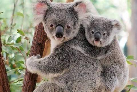 昆士兰大学动物