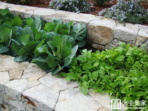 东莞菜园庭院设计出别墅经济小蔬菜,a菜园!v菜园详图别墅四层绿色图片