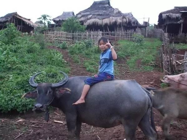 农村孩子放牛