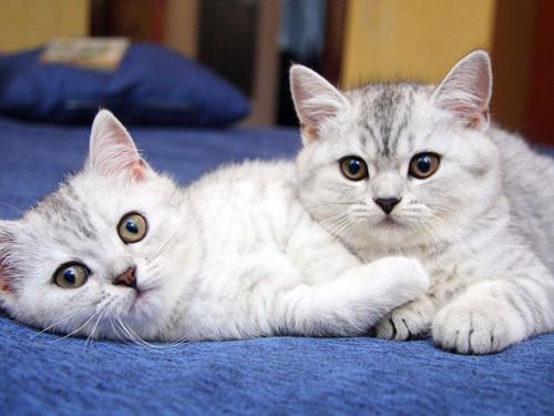 宠物趣闻:成年猫大便半干半稀