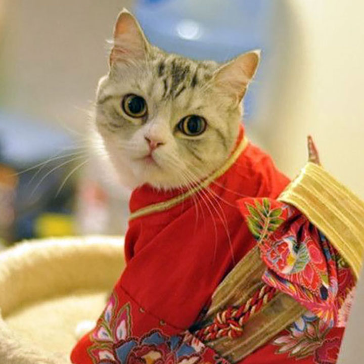 最萌的图片_这是你见过最可爱,最萌的包子脸猫咪