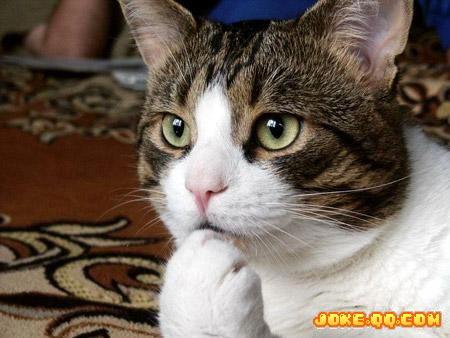 壁纸 动物 猫 猫咪 小猫 桌面 450_338图片