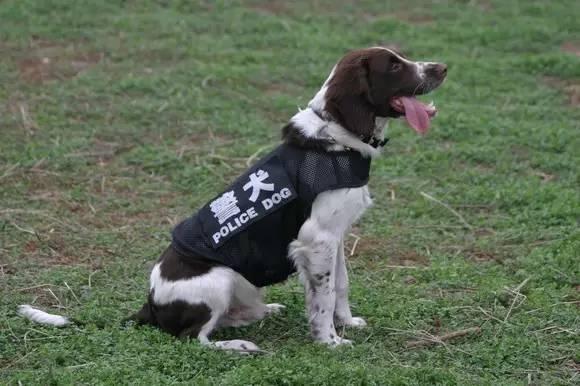 天退休,他训的警犬能在870吨水中嗅出一滴血的味道