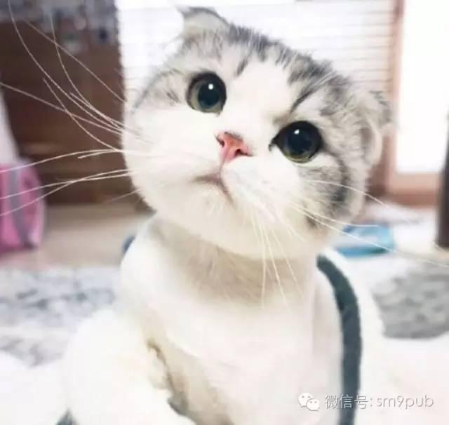 杨颖拿猫手绘图