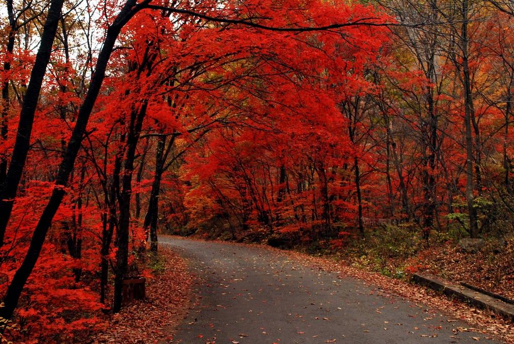 """东北""""三宝""""产地-蒲石河森林公园图片"""
