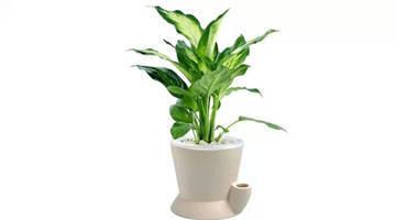 十二生肖养什么植物最旺自己的财运?