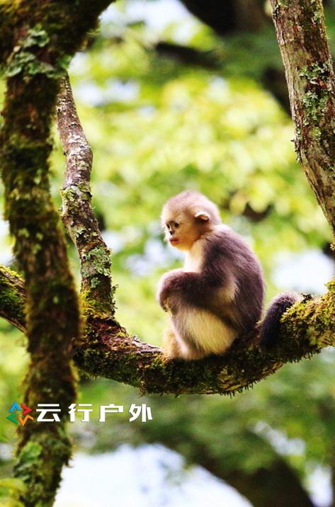 丽江—香格里拉—梅里雪山环线之滇金丝猴国家公园