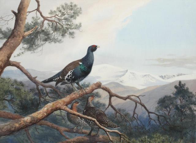 飞鸟画家 | 约翰·哈里森