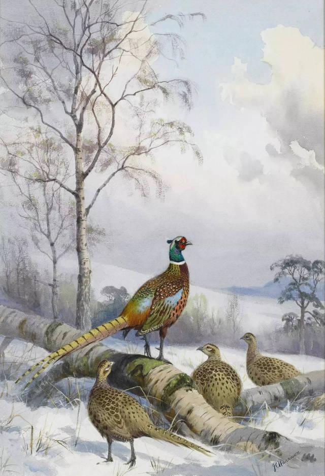 飞鸟画家   约翰·哈里森