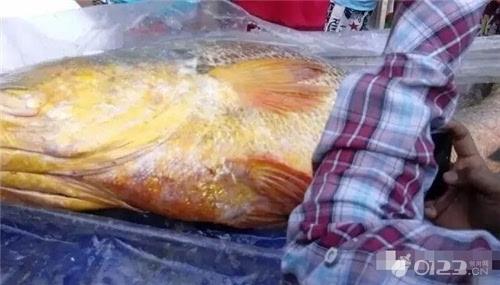 中国土豪买走缅甸18万乌鲁木齐人流价钱元天价鱼 这鱼竟然能治不
