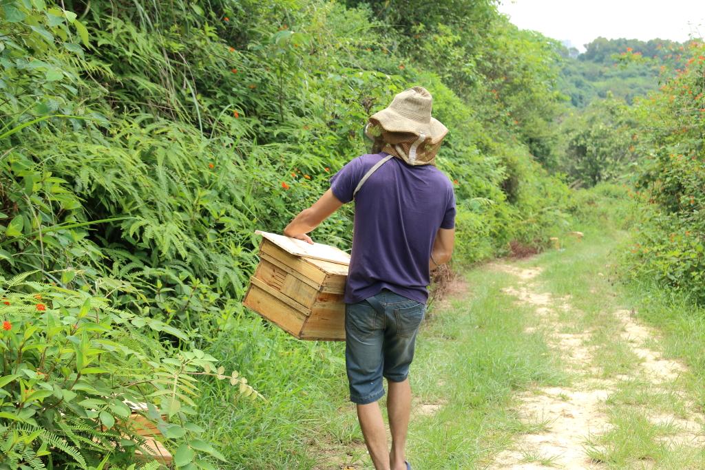深山养蜂人的蜜意生活