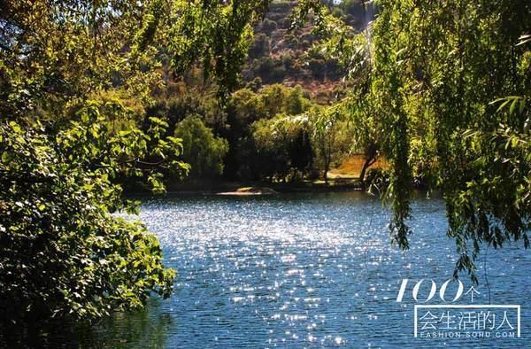 Lotus Pond in Sunlight