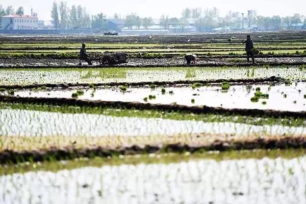 一亩田19日农业新闻聚合:暴雨加剧油菜籽减产