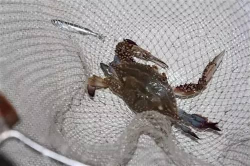 像跑男那样去海上玩水,感觉海上漂的图片棒极鳄龟半斤有多大飞鱼图片
