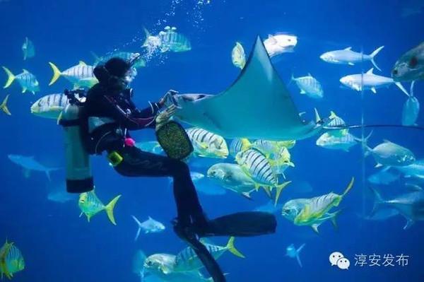 想潜入海底两万里吗?