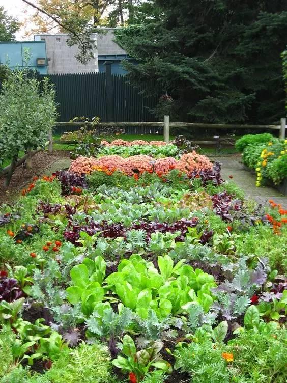 菜园景观图片