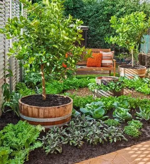 愿有一小院,种菜图片