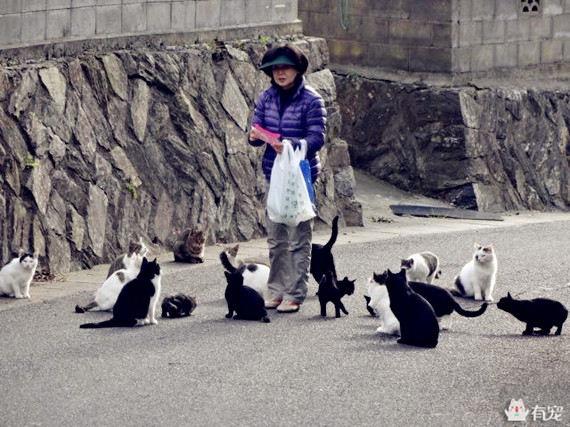 猫生几个由什么决定图片