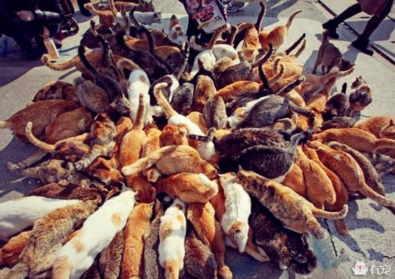 猫生几只取决于什么图片