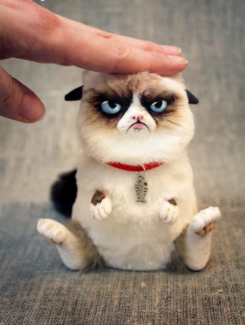 生气猫,不爽猫,吐舌猫等,可爱外表下的心酸故事