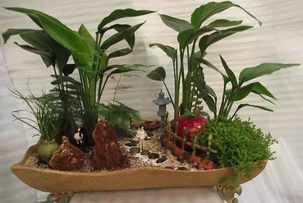 组合盆栽的植物搭配,美呆了!