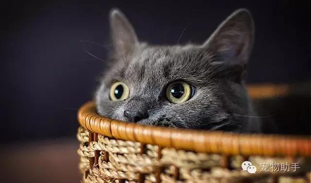 猫咪的听力到底有多神奇?