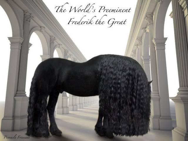 每日一PO宠:也许是世界上最高贵的骏马!-蠢萌说