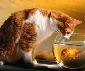 哪些食物是对猫有害的
