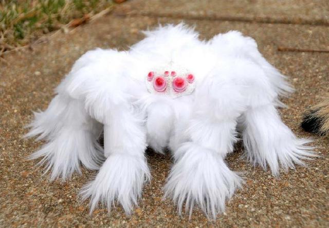 每日一PO宠:极其罕见的神奇生物,认识一半算你厉害-蠢萌说