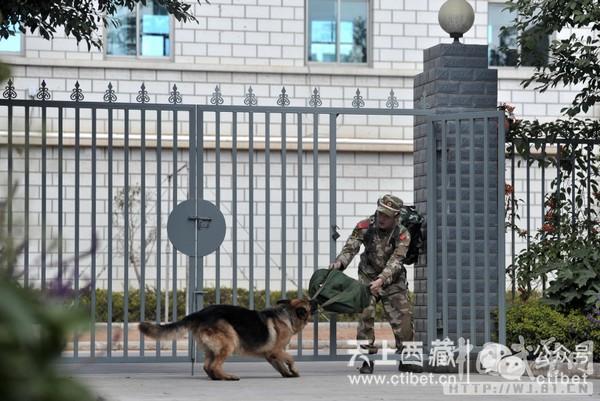 退役军犬的宿命,藏獒是否能当军犬图片