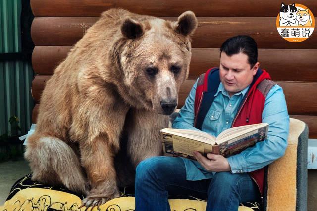 每日一PO宠:养狗养猫都弱爆了,战斗民族直接养熊-蠢萌说